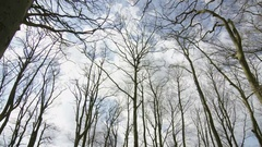 4K Woodland area with lots of trees on a clear bright day. No people.  Stock Footage