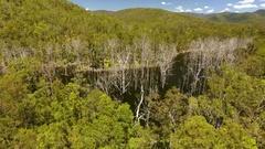 4K Aerial Of Dead Trees In Tweed River Stock Footage