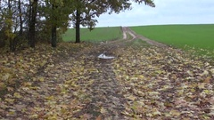 Puddle in muddy farmland road Stock Footage