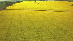 4K Aerial High Shot Over Yellow Rape Seed Crop Stock Footage