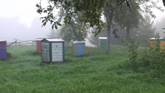 Multicolored beehives in apple orchard Stock Footage