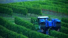 Grape Harvest Machine - Bordeaux Vineyard Stock Footage