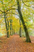 Footpath in forest covered with fallen leaves in fall Stock Photos