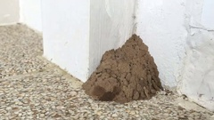 Time lapse wasp making nest with clay in a corner of a house Stock Footage
