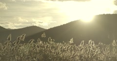 Sunset over the hill illuminated spectacular cane Stock Footage
