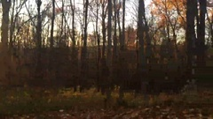 Fall Woods Trees Pan at Sunset Stock Footage