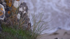 Slow Motion Grass with Crashing Waves Below Stock Footage