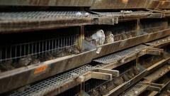 Growing quail on the farm Stock Footage
