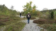 Flint stone field of Neu Mukran (Rugen island) Stock Footage