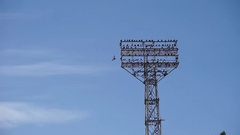 A football stadium light tower full of birds, some birds fly away Stock Footage