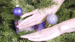 Female hands find a New Year's gift lies among branches of a Christmas fir-tree Stock Footage