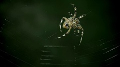 Slow motion close up of spider weaving its web Stock Footage