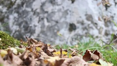 Autumn background, moss and stone Stock Footage