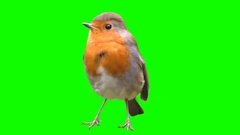 Bird on a green background, cut out Stock Footage