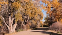 Bike trail with large cottonwood trees in the Autumn. Stock Footage
