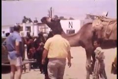 Camel in front of United Nations (Vintage 1950's) Stock Footage