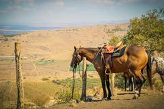 Horse tie to a pole in a ranch at rural area Stock Photos