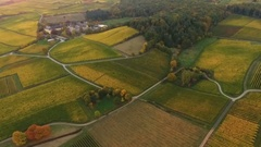 Aerial view of autumnal vineyards at dusk Stock Footage