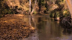 Small creek in the Autumn. Stock Footage
