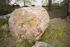 Logs Trees Rock Ginko Petrified Forest Washington USA Stock Photos