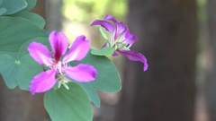 Pink Flowers Bokeh 4K Nature Background Footage Stock Footage