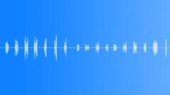 Sea gull Sound Effect