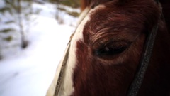Closeup of beautiful brown and white horse eye. Stock Footage