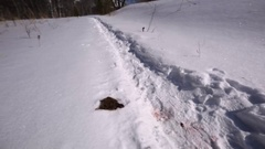 Closeup view of the snowy path and a small dead animal near it. Stock Footage