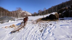 Empty horse cart waiting for the owner. Winter scenery. Stock Footage