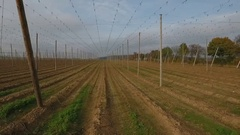 Flying thru a harvested Hop Field Stock Footage