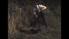 Vintage 16mm film, 1955 man and dachshund dog dig earth hunting prairie dogs Stock Footage