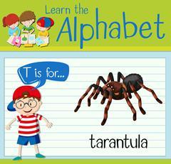 Flashcard letter T is for tarantula Stock Illustration