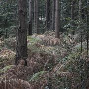 Wonderful atmospheric forest landscape image in Autumn Fall Stock Photos