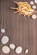 Light pebbles and big shell on wooden ebony background Stock Photos