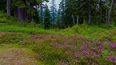 Alpine trail in bloom Stock Footage