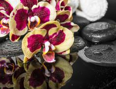 Spa stones with drops and blooming twig of orchid (phalaenopsis ) with reflec Stock Photos