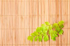 Green branch of fern on wooden bamboo  background Stock Photos