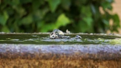 Detail of gush output water overflows from a stone fountain and falls slowly Stock Footage