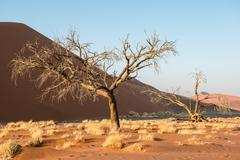 Close view of dry trees and plants during Namibian winter Stock Photos