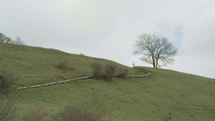 4K Scenic view of peaceful area in the English countryside Stock Footage