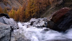 Stream with larches (Larix decidua) in  fall - Gran Paradiso National Park Stock Footage
