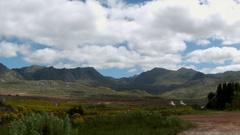 Field of Flowers, Mountain, Landscape,Dust Road, Cape Town Western Cape Stock Footage