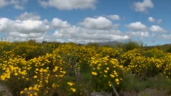 Field of Flowers Focus Rack Cape Town Western Cape Stock Footage