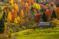 Woodshed on the hillside in autumn mountains Stock Photos