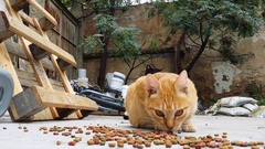 Cats eating dry cat Food in a backyard of an abandoned house Stock Footage