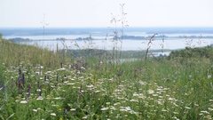 Meadow with flowers with river on background Stock Footage