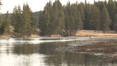 Trout Flyfishing Fishermen on River in Mountains at Yellowstone National Park Stock Footage