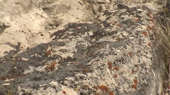 American Mountain Pika in Rocks in Rocky Mountains at Yellowstone National Park Stock Footage