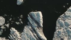 Seals And Birds At Jokulsarlon Glacier Lagoon Stock Footage