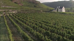 Vineyards and a Chateau Stock Footage